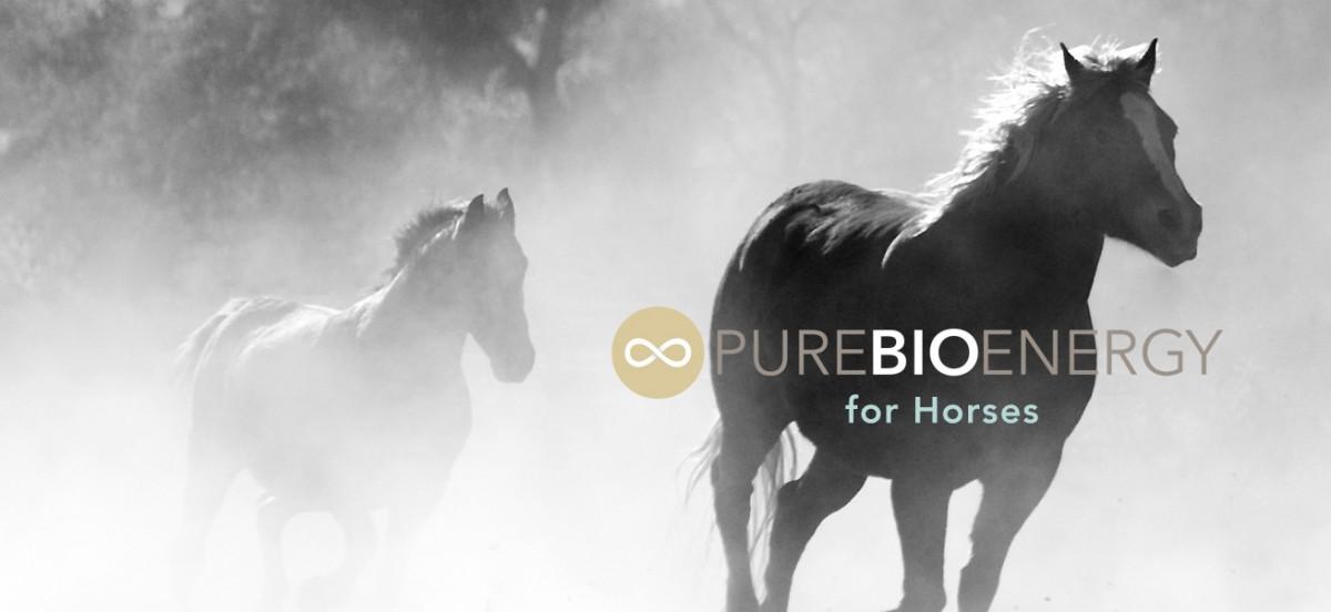 PureBioenergy healing horses