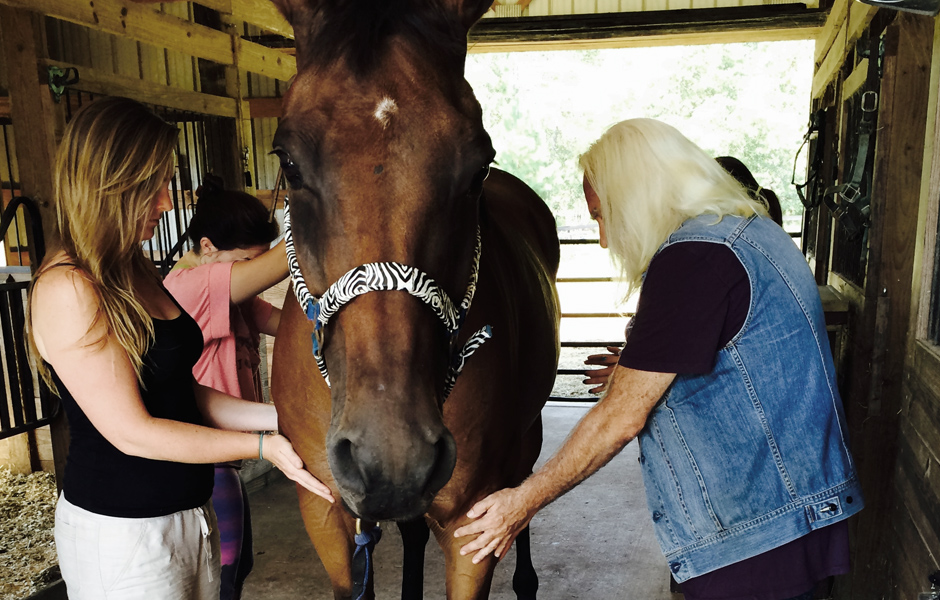 Zoran teaches students healing horses with energy