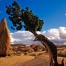 joshua-tree-national-park-334