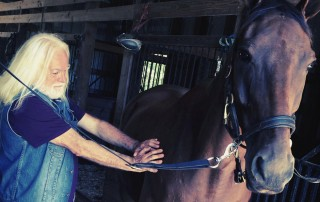 Energy healing and Horses