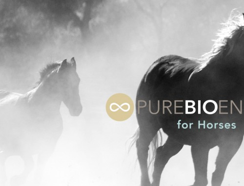 5 ways PureBioenergy Healing can Empower Every Horse Owner