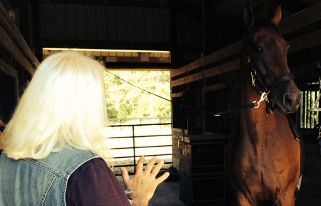 Zoran does long distance healing on a horse