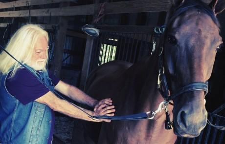 Energy healing and Horses